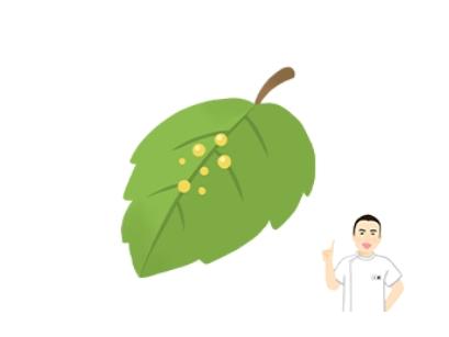 東洋医学(鍼・漢方)