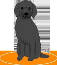 動物医療保険について